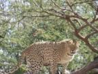 leopardenfans Avatar